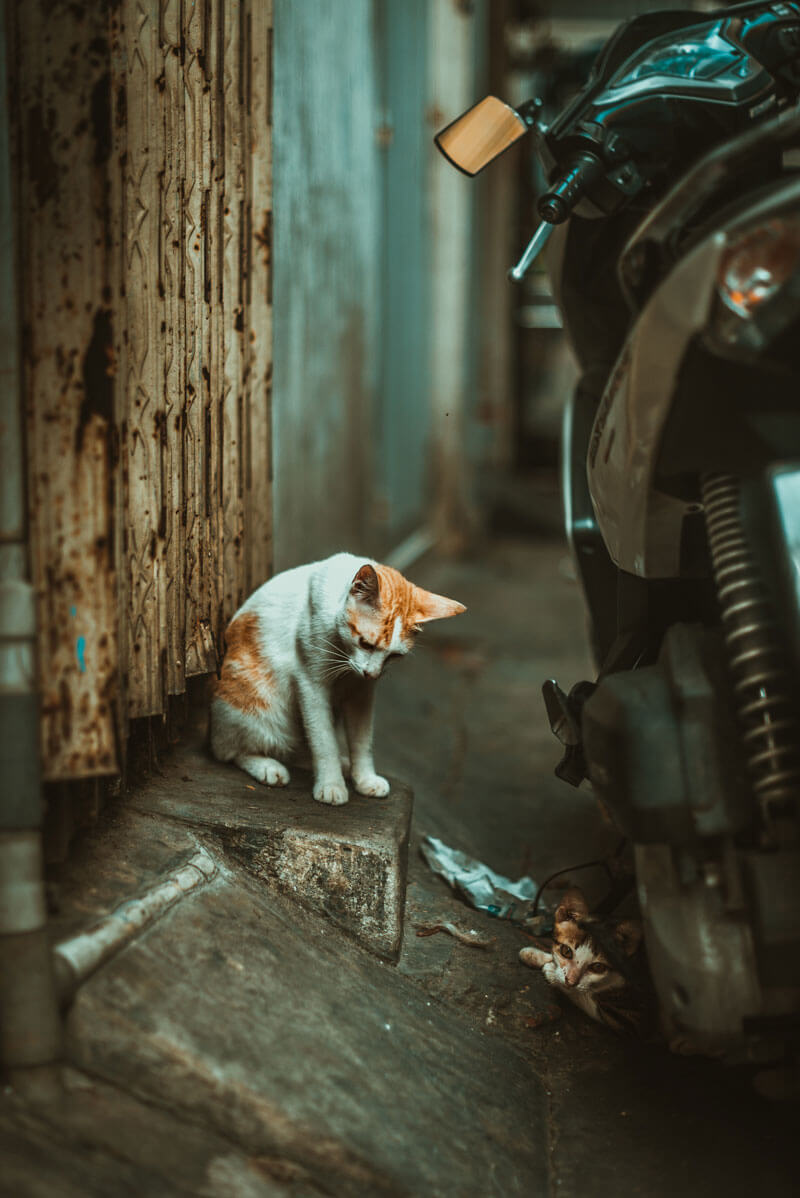 cat in the alley Ho Chi Minh City Vietnam